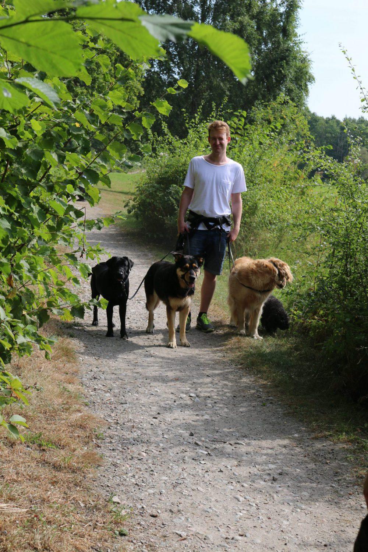 hundpromenad i solen